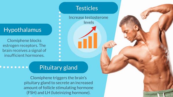 Clomiphene for bodybuilding
